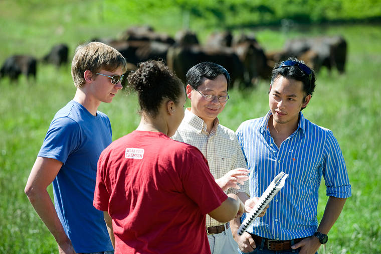 Animal_Science_Professor_Zhihua_Jiang_works_with_students_in_cattle_pasture