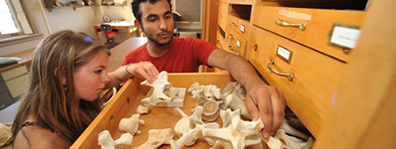 anthropology students reviewing bones - zooarchaeology