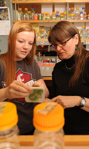 Plant sciences at WSU