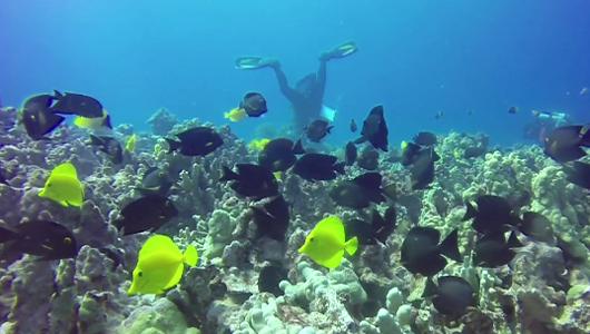 dozens of fish around coral reef