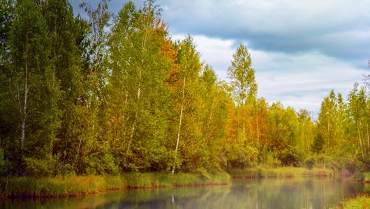 Trees at edge of a lake