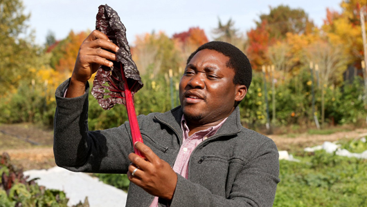 Student research in the field, holding a stalk of rhubarb