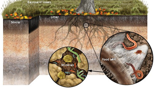 artists depiction of carbon in soil