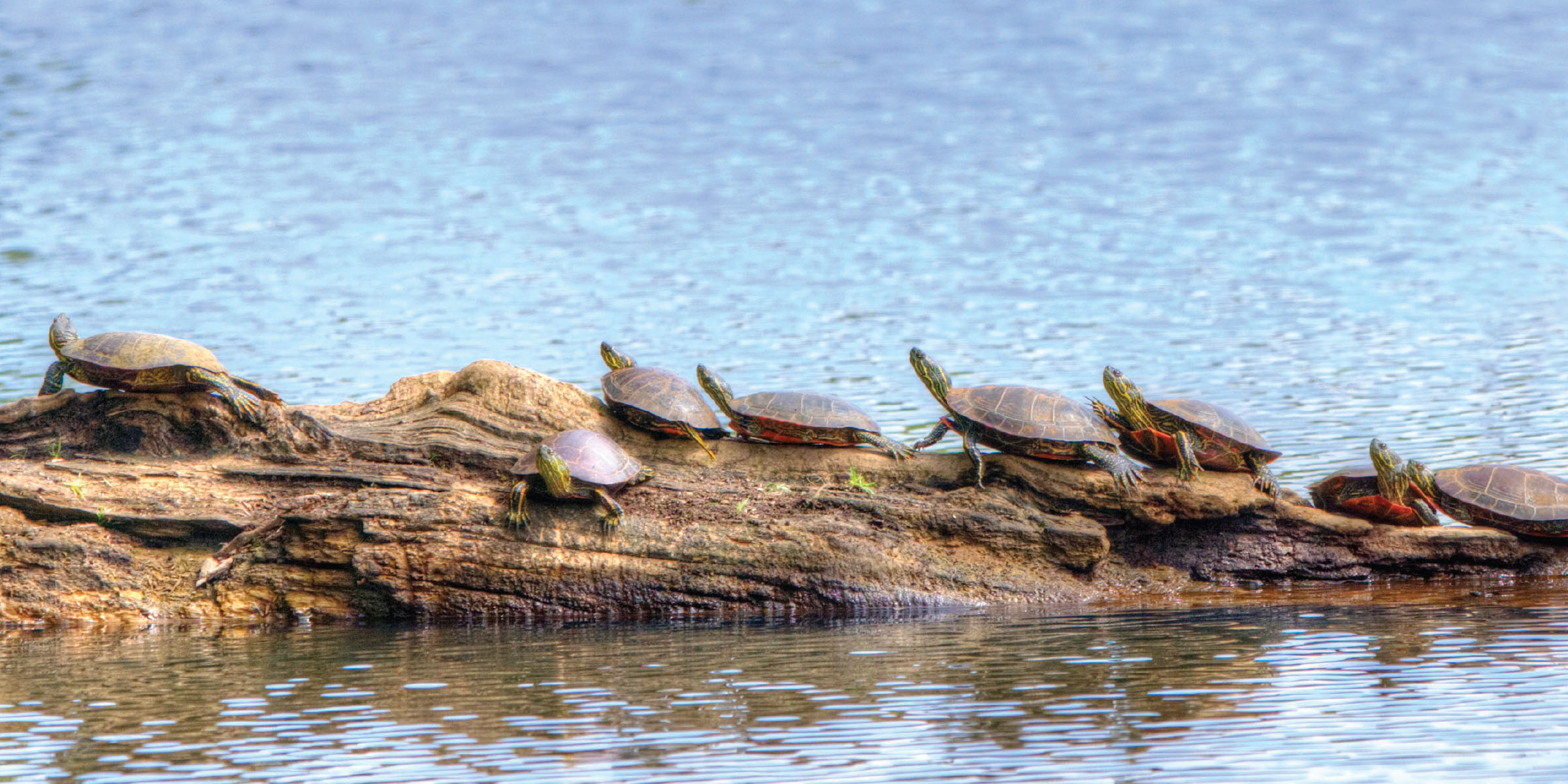 Turtle Row