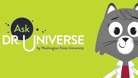 Dr. Universe. A cartoon cat in a lab coat