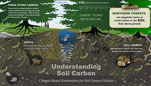 Infographic about soil carbon.