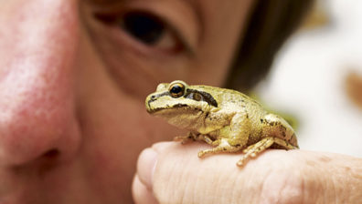 small frog sits on a person's finger