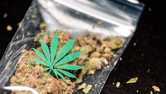 Plastic bag containing marijuana.