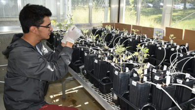 Student working with plants.