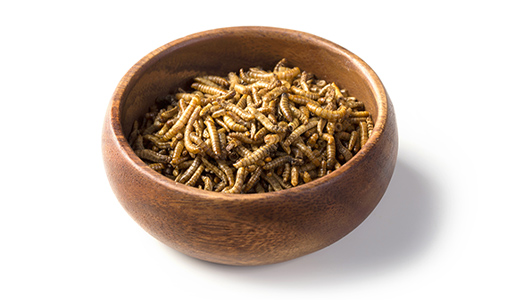 Mealworms in a wooden bowl.