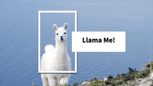 Llama Me!