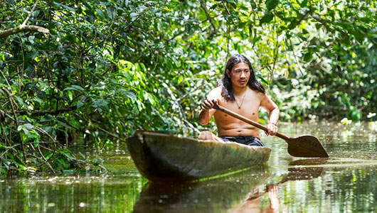 ndigenous adult man on typical wooden canoe chopped from a single tree navigating murky waters of Ecuadorian Amazonian primary jungle.
