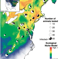 The distribution of ranavirus infections in the eastern range of wood frogs