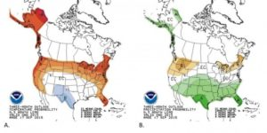 Three month outlooks for December-January-February temperatures (A) and precipitation (B) for the United States, from the National Oceanic and Atmospheric Administration (NOAA) Climate Prediction Center. In the temperature map, areas in red (marked A) means a likelihood of above normal temperatures. In the precipitation map, areas in brown (marked B) have a likelihood of below normal precipitation. The Climate Prediction Center also has more information on how to read these maps. Click map for link.