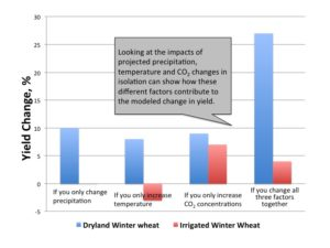 Percentage change in average Washington State yields of non-irrigated winter wheat and irrigated winter wheat between the historical (1977-2006) and future (2030s) time period. Effects are broken out to show impact of changes in precipitation, temperature, carbon dioxide, as well as all impacts combined.