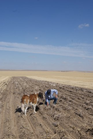Farmer with dog examines soil in recently plowed row in a wheatfield