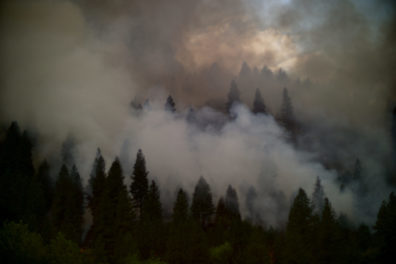 Conifer forests with trees surrounded by smoke.