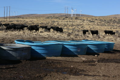 Native sagebrush steppe with windmills in the background, cattle in the mid-ground, and water tubs in the foreground