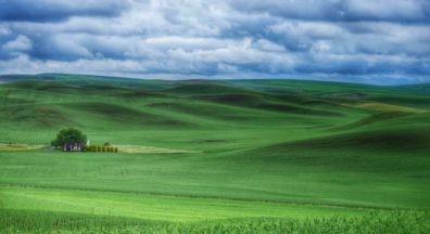 Rolling landscape of the Palouse, with winter wheat from edge to edge of the photo
