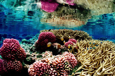 Colorful coral reef, under water