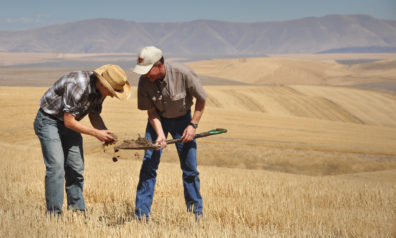 Two men bent over a shovelful of soil in a harvested wheat field.