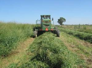 Tractor and mower moving away, leaving a row of cut grass