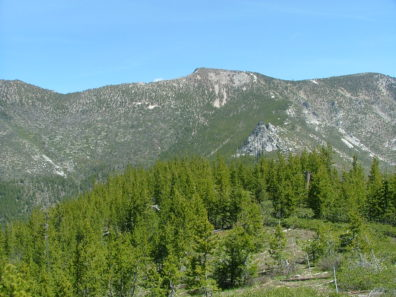 Hillsolope with trees in the foreground, and rockier slopes with a forested patch in the background