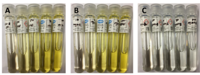Three series of test tubes with liquid in them, ranging in color from transparent to pale yellow.