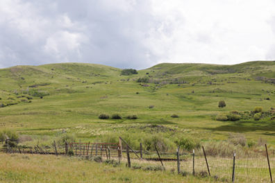 Grassy, green hillslope with some shrubs scattered around