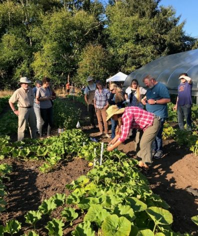Group of people around and observing a row of squash plants