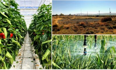 Collage of three photos, with plants in greenhouse, a dry pond with no vegetation, and a sprinkler over a crop, close up