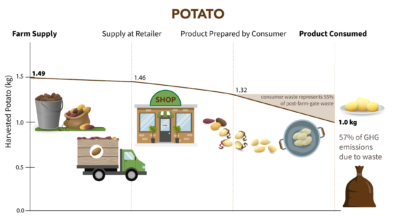 Diagram showing relative losses across steps in the supply chain, such that 1.49 kg of potatoes at the farm gate are reduced to 1 kg of potatoes consumed