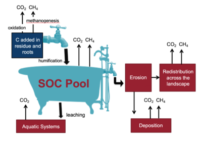 Diagram showing a bathtub representing soil carbon, and taps showing inputs, and drainage showing losses