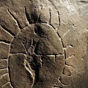 Archaeology / Prehistory