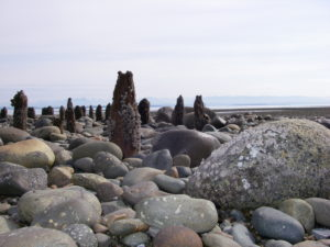 Wood stake features on Vancouver Island beach