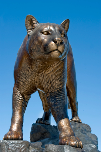 Cougar Statue on WSU Campus