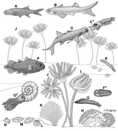 Conscious animals of ancient ocean, 330 million years ago, from Feinberg and Mallatt 2016 book