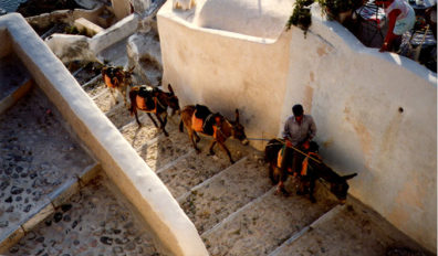SANTORINI: Donkeys and mules are still practical means of transportation in these steep island villages.