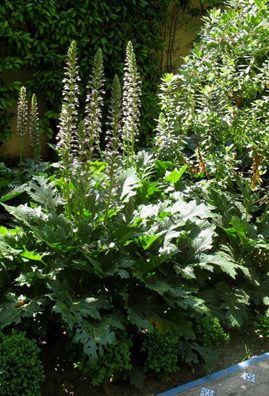 SEVILLA: Acanthus, the plant whose leaves inspired the Corinthian capitals on Classical columns.