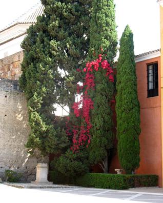 SEVILLA: More plants in the elaborate gardens.