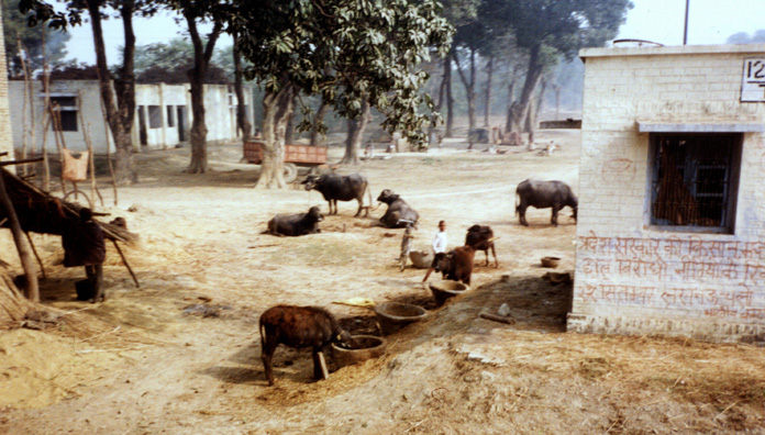 View of a village on the road between Varanasi and Patna.