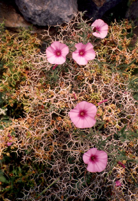 AMORGOS: The geometric patterns created by the thorns of the plant were intriguing.