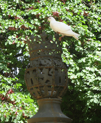 SEVILLA: White dove on a street light in the Parque Maria Luisa. For most of our stay in Spain, to be out of doors was to hear a constant background of birdsong. Parque Maria Luisa, Sevilla