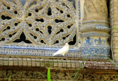 SEVILLA: Another dove on a Royal Pavilion window ledge, part of the structures built for the Ibero-American Exposition of 1929.