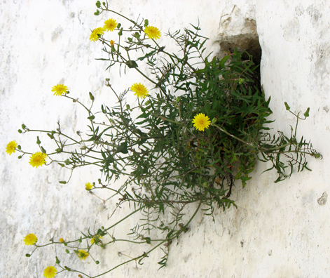 VEJER DE LA FRONTERA: Flowers sprang from every crevice.
