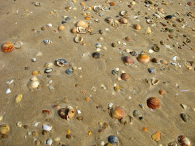CONIL: The beach at Conil is a shell-collector's paradise.