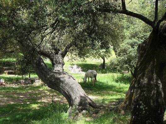 PARQUE NATURAL DE LOS ALCORNOCALES: Horse grazing in a roadside picnic spot in the Parque Natural de los Alcornocales.