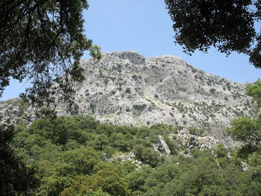 PARQUE NATURAL DE LOS ALCORNOCALES: View of the mountain behind the picnic spot.