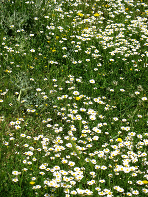 PARQUE NATURAL DE LOS ALCORNOCALES: The ground was carpeted with flowers . . .