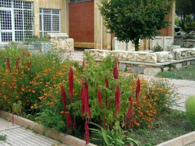 AFRODISIAS MUSEUM: The entry to the fine little museum on the site, well worth the extra price of admission. This is amaranth blooming in the courtyard by the entrance.